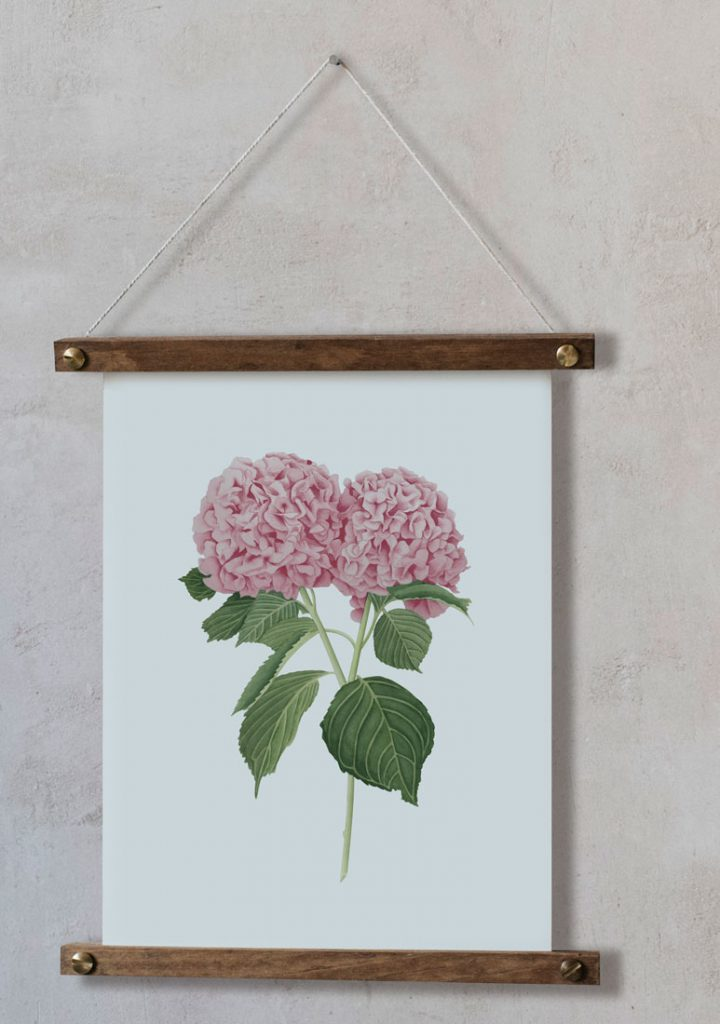 Ilustracion-hortensia-acuarela-botanica-campestre-enmarcada-bastidor-Hydrangea-rosa