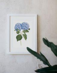 Ilustracion-hortensia-acuarela-botanica-campestre-enmarcada-blanco-Hydrangea-azul