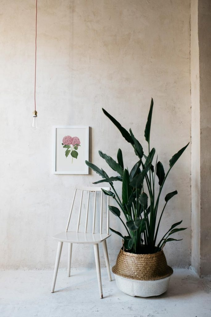Ilustracion-hortensia-acuarela-botanica-campestre-enmarcada-blanco-Hydrangea-rosa-silla