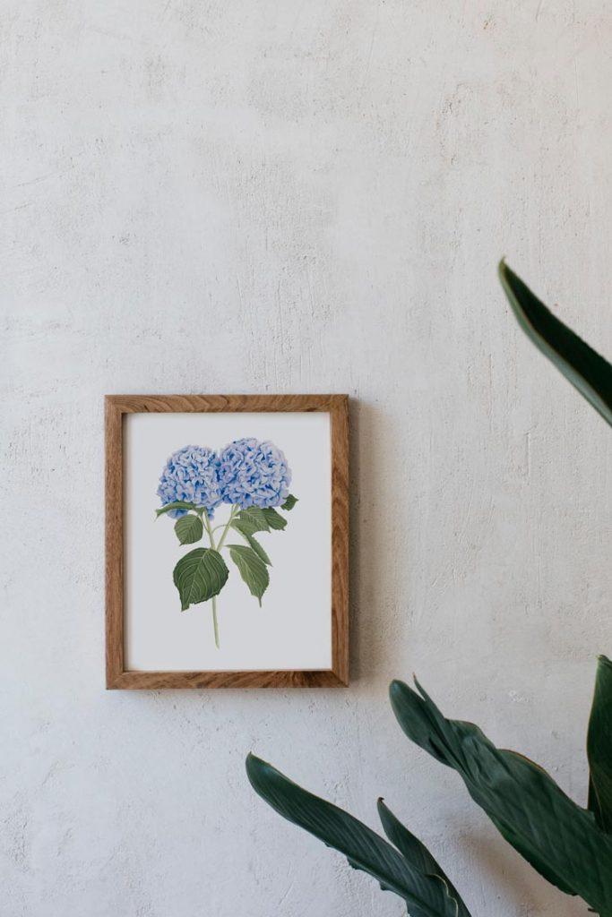 Ilustracion-hortensia-acuarela-botanica-campestre-enmarcada-madera-Hydrangea-azul
