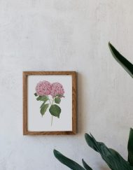 Ilustracion-hortensia-acuarela-botanica-campestre-enmarcada-madera-Hydrangea-rosa