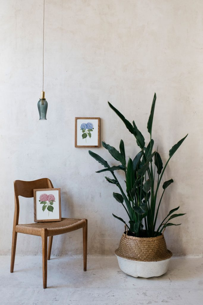 Ilustracion-hortensia-acuarela-botanica-campestre-enmarcada-madera2-Hydrangea-azul