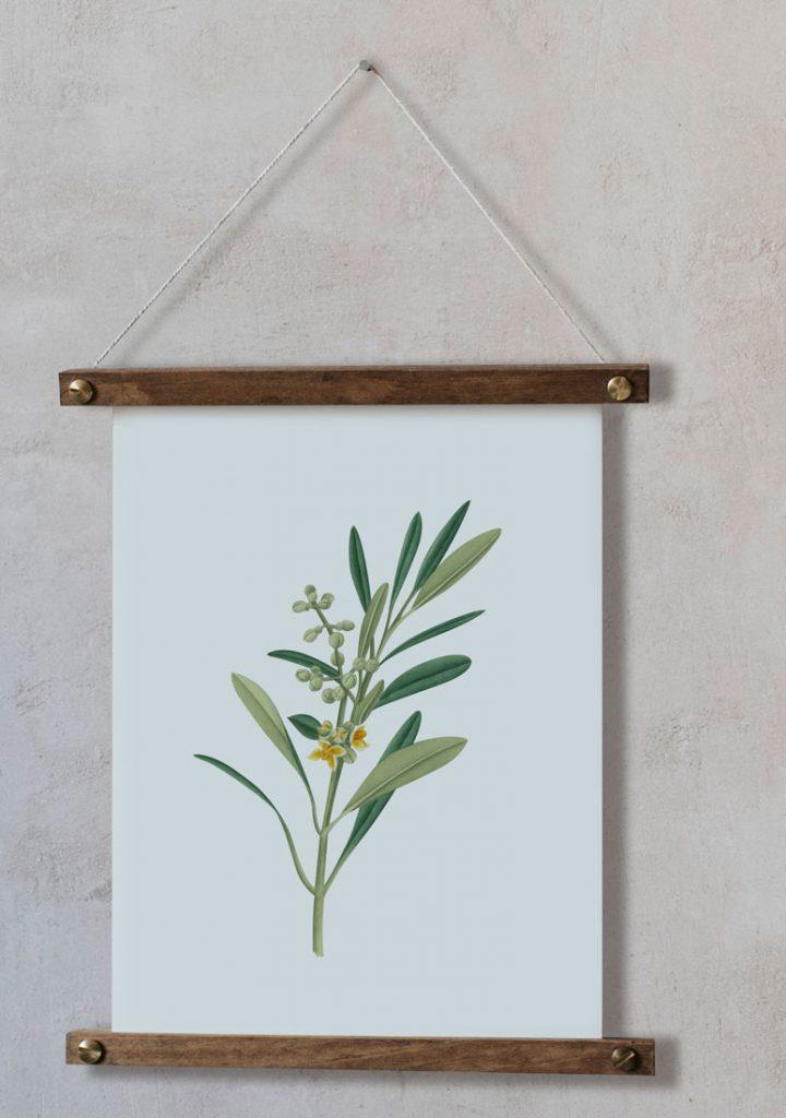 Ilustracion-olivo-acuarela-botanica-campestre-enmarcada-bastidor-Olea-europaea-2