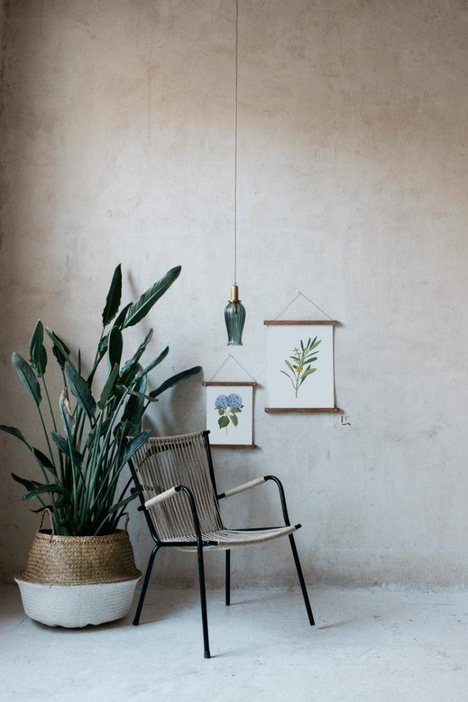 Ilustracion-olivo-acuarela-botanica-campestre-enmarcada-bastidor-Olea-europaea-silla