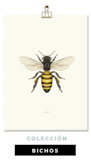 lamina-botanica-con-ilustracion-en-acuarela-coleccion-bichos