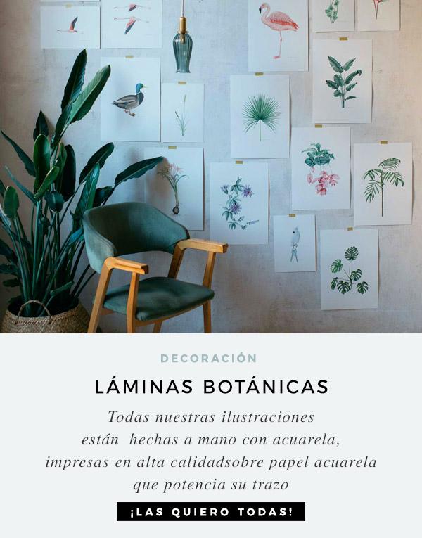 laminas-botanicas-con-ilustraciones-en-acuarela-CEBECERA-CUADRADA