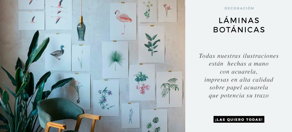 laminas-botanicas-con-ilustraciones-en-acuarela-CABECERA