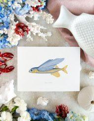 Ilustraciones botanicas acuarela pez volador colección océanos