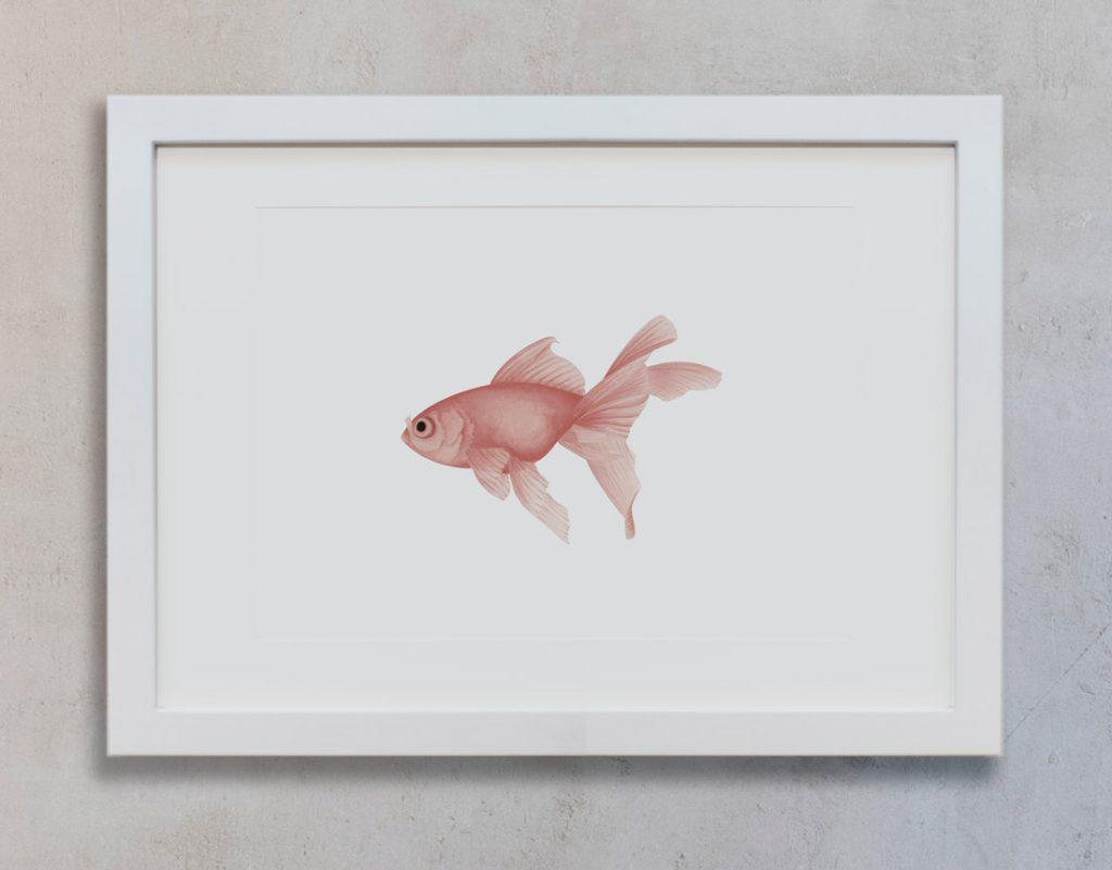 Pez-rosa-marco-blanco-vertical-suelto-MAR-CARASSIUS-AUREATUS-ROJO