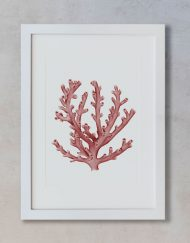 acuarela-botanica-boda-coral-oceano-marco-blanco-vertical-suelto-MAR-LOPHELIA-PERTUSA-ROJO