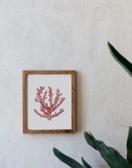 acuarela-botanica-boda-coral-oceano-marco-madera-1-LOPHELIA-PERTUSA-ROJO