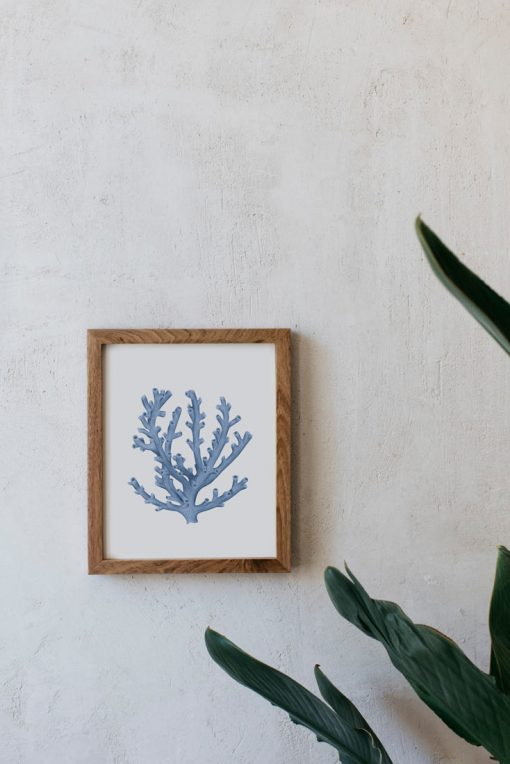 acuarela-botanica-coral-azul-oceano-marco-madera-1-LOPHELIA-PERTUSA-AZUL