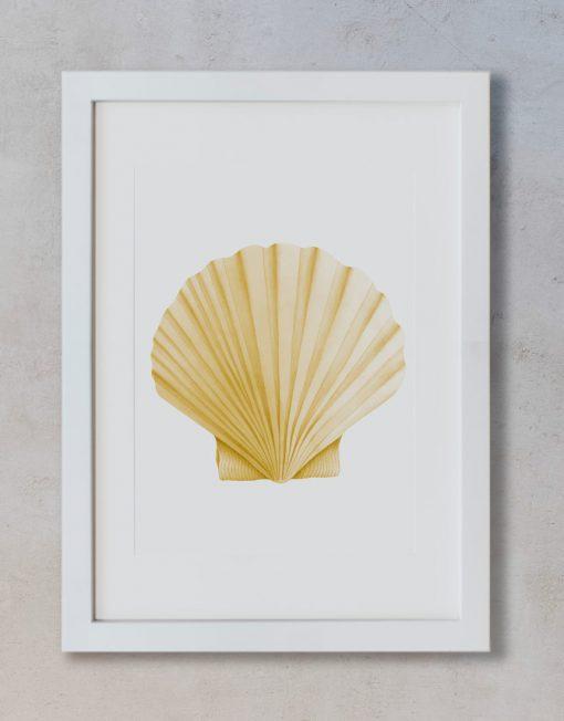 acuarela-dibujo-concha-santiago-galicia-marco-blanco-vertical-suelto-MAR-PECTEN-MAXIMUS
