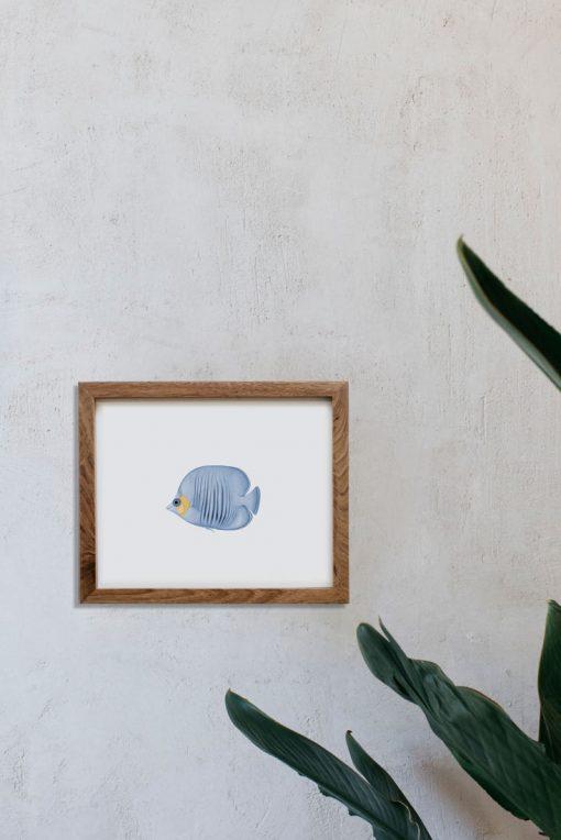 decoracion-interiores-lamina-botanica-pez-azul-marco-madera-1-HORIZONTAL-POISSON-PAPILLONS