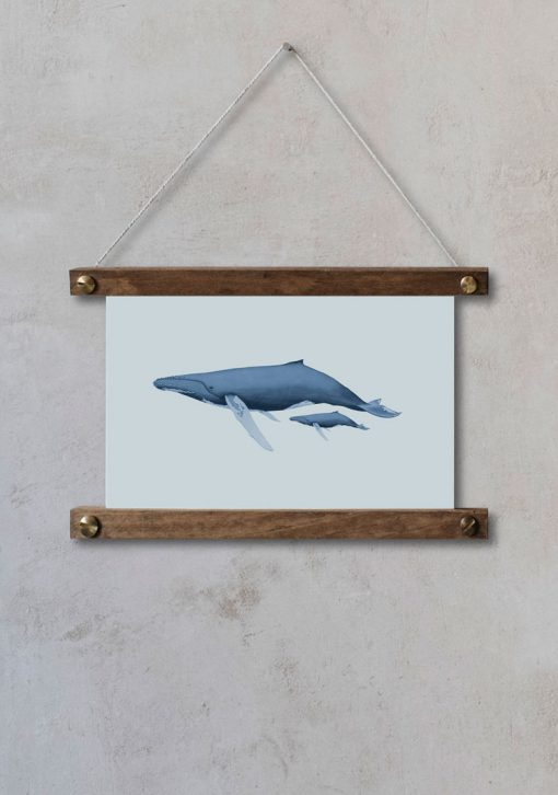 dibujo-ballena-acuarela-ilustracion-bastidor-HORIZONTAL-BALANIDAE-FAMILIA