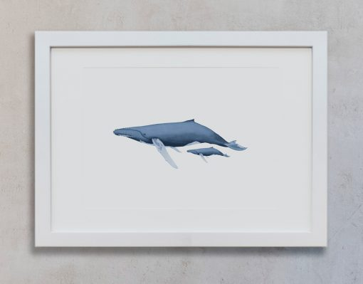 dibujo-ballena-acuarela-ilustracion-marco-blanco-vertical-suelto-BALANIDAE-FAMILIA