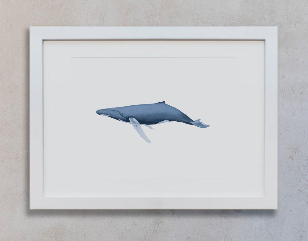 dibujo-ballena-acuarela-ilustracion-marco-blanco-vertical-suelto-MAR-BALANIDAE