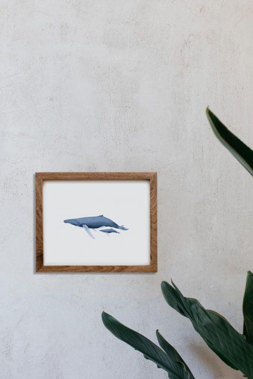 dibujo-ballena-acuarela-ilustracion-marco-madera-1-HORIZONTAL-BALANIDAE-FAMILIA