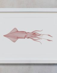 ilustracion-botanica-calamar-marco-blanco-suelto-MAR-TEUTHIDA-HORIZONTAL