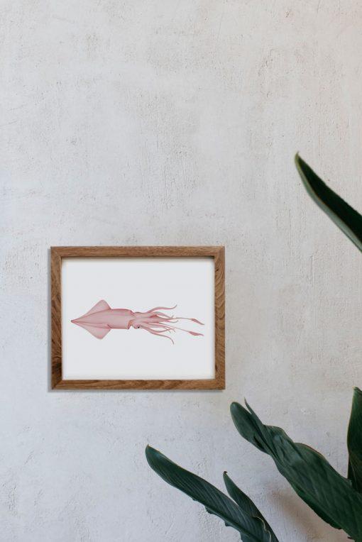 ilustracion-botanica-calamar-marco-madera-1-TEUTHIDA-HORIZONTAL