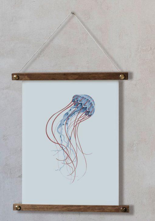 ilustracion-botanica-medusa-acuarela-bastidores-cuadro-pared-CYANEA-CAPILLATA-AZUL