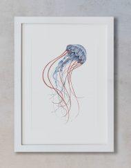 ilustracion-botanica-medusa-acuarela-marco-blanco-vertical-suelto-MAR-CYANEA-CAPILLATA-AZUL