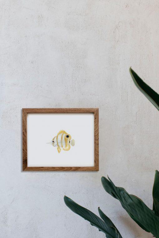 ilustracion-botanica-pez-mar-marco-madera-1-HORIZONTAL-CHAETODON