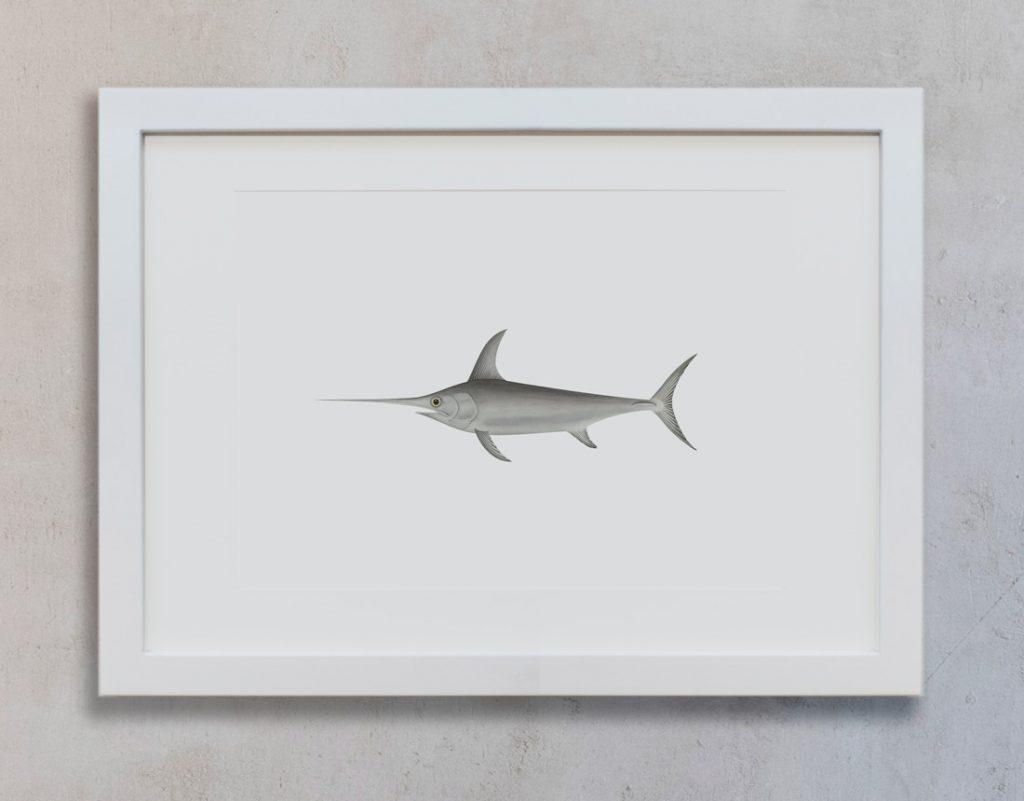 lamina-dibujo-pez-espada-decoracion-pared-marco-blanco-vertical-suelto-MAR-XIPHIAS-GLADIUS