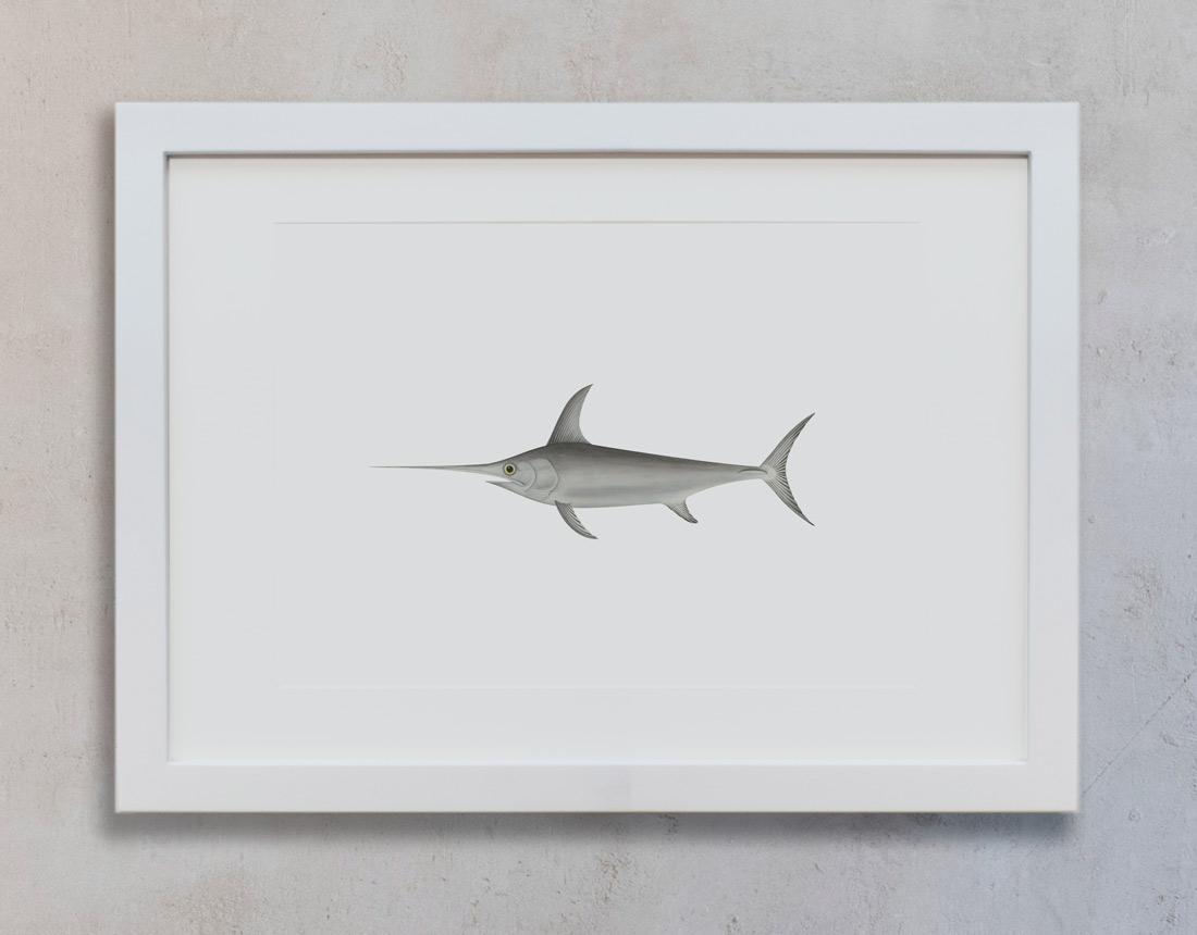 Colección Océano de ilustraciones botánicas | Llena de vida marítima ...