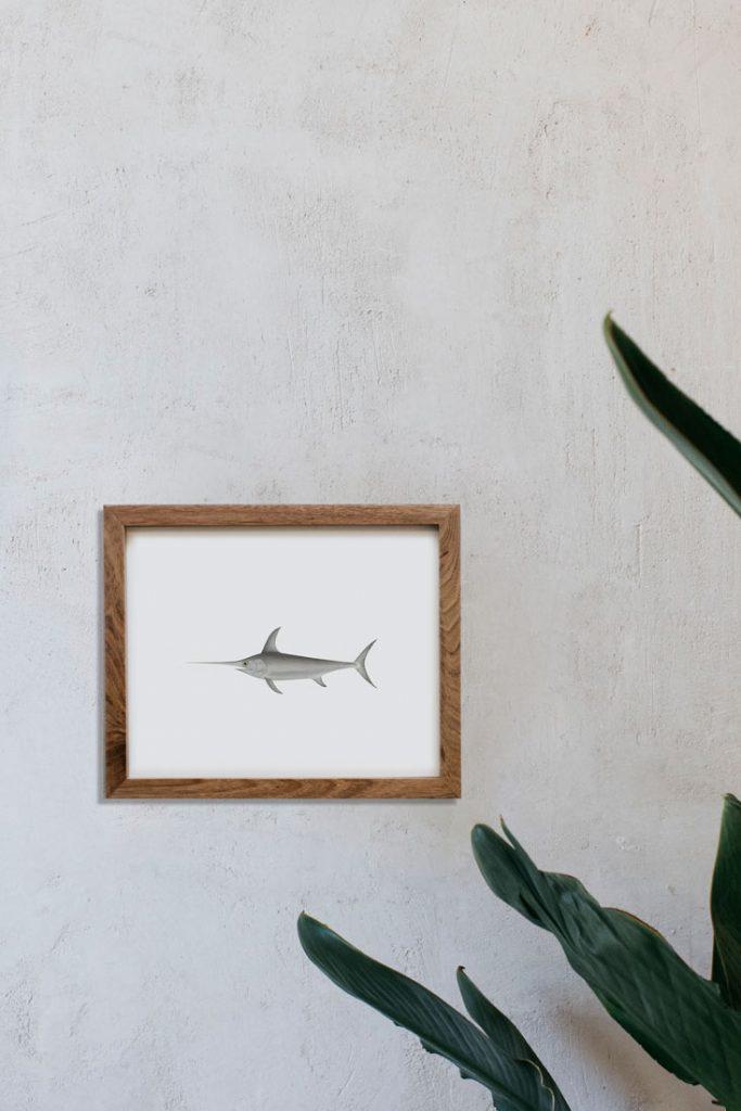 lamina-dibujo-pez-espada-decoracion-pared-marco-madera-1-HORIZONTAL-XIPHIAS-GLADIUS