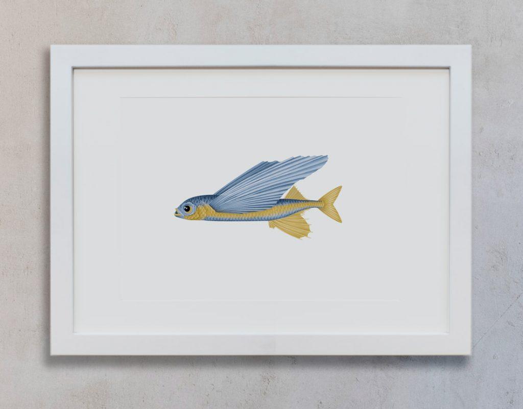 lamina-pared-pez-volador-botanico-a-mano-MAR-EXOCOETIDAE