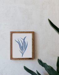 lamina-regalo-alga-acuarela-marco-madera-1-ALGA