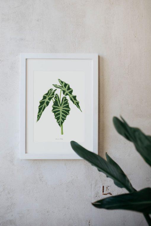 PLANTAS-ACUARELA-MOCKUP-ALOCASIA-POLLY-VERDES-DE-INTERIOR-MARCO-BLANCO-VERTICAL