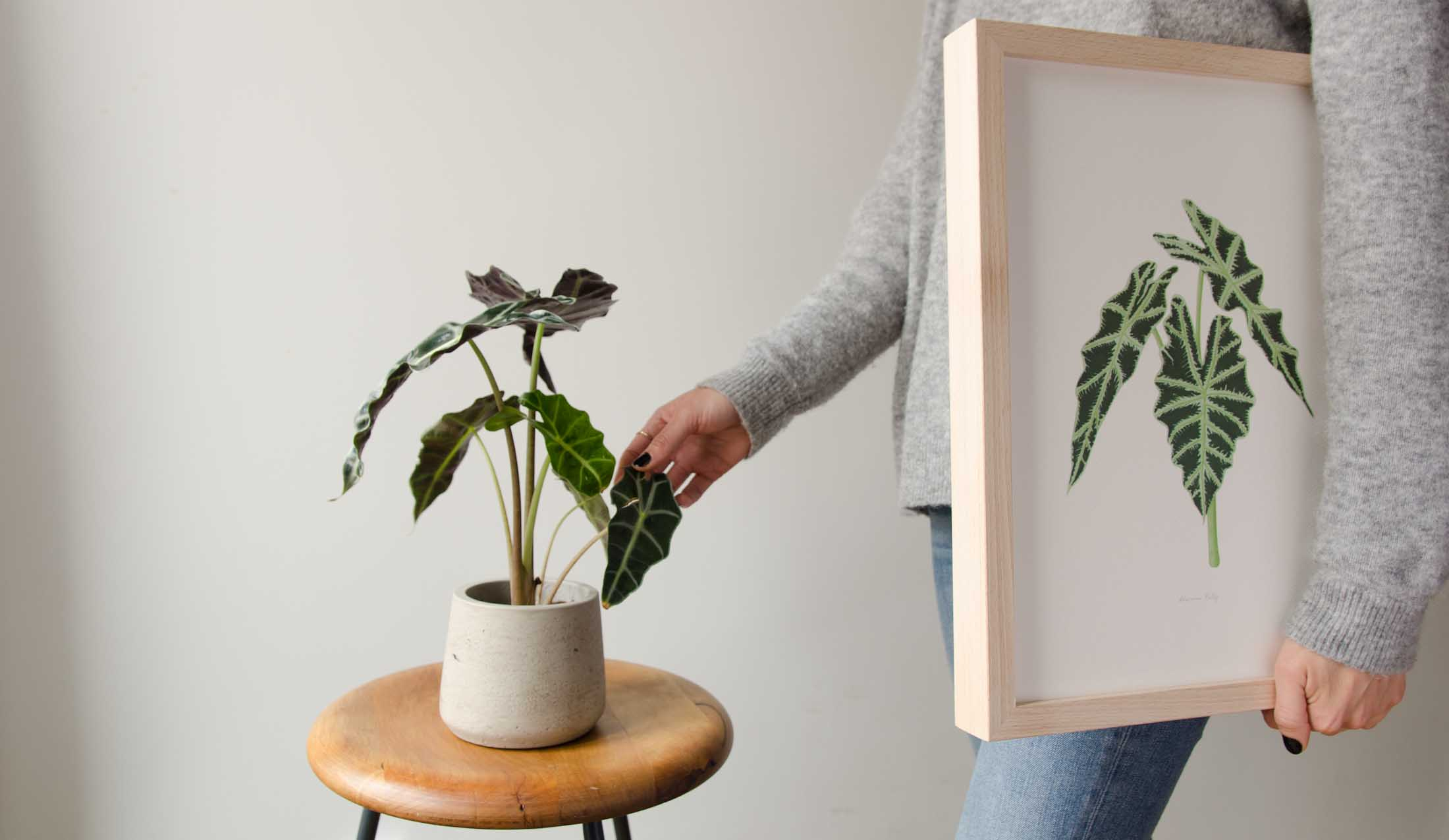 Regalos Originales 2019 - Save the date projects the botanical nook plantas interior-2