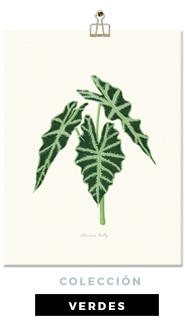 lamina-botanica-con-ilustracion-en-acuarela-coleccion-verdes