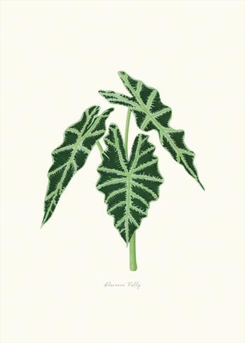 laminas-botanicas-VERDES-DE-INTERIOR-landing