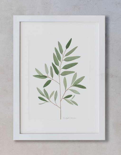 ilustración eucalipto hecho a mano en acuarela