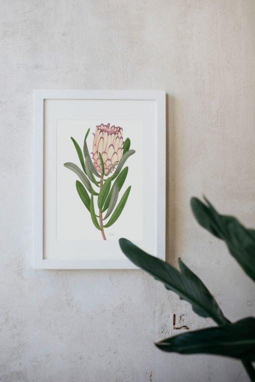 detalle cuadro para pared con protea dibujada en acuarela marco blanco