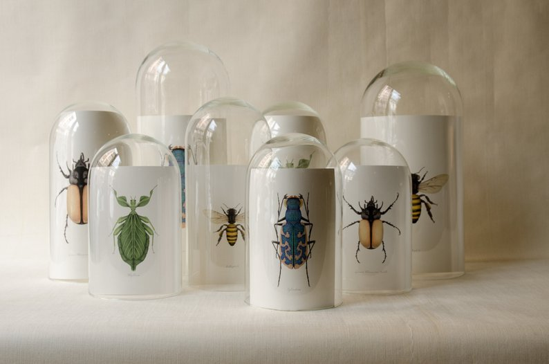 ilustraciones a mano de insectos botanicos
