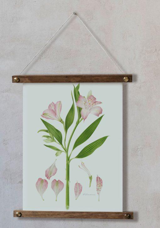 Bastidor de madera con Dibujo Botánico - AlstroemeriaBastidor de madera con Alstroemeria
