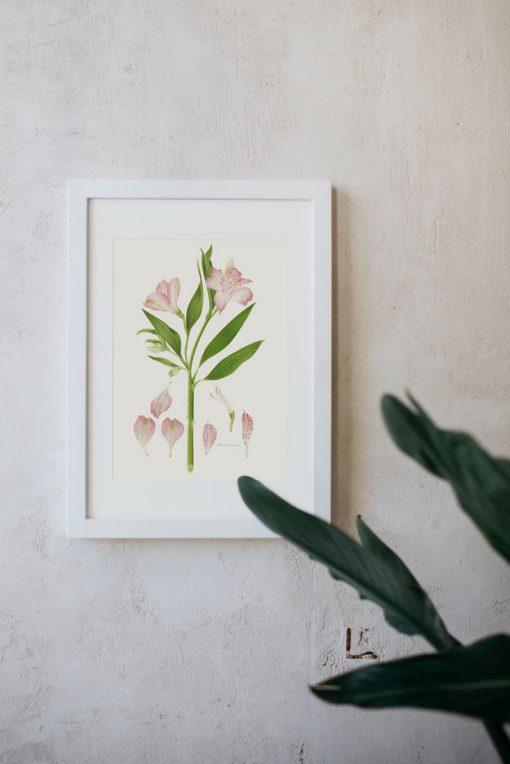 cuadro colgado con ilustración de Alstroemeria