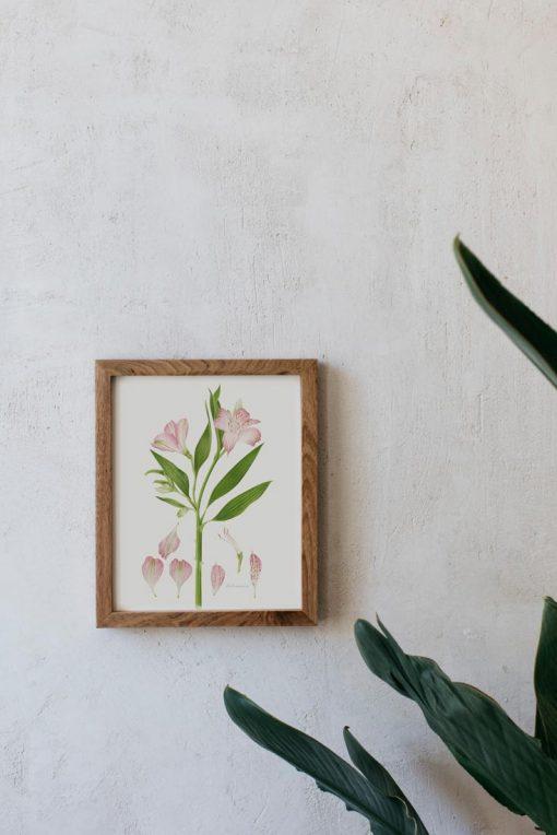 cuadro de madera con ilustración de Alstroemeria