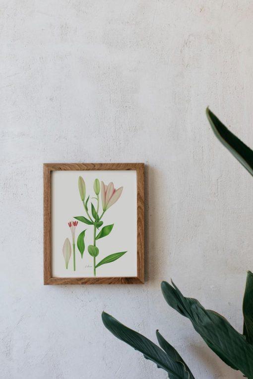 Lilium en marco marrón