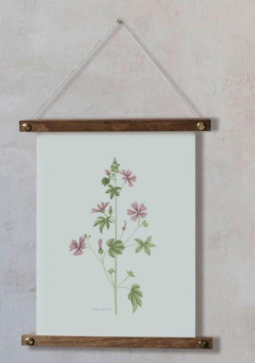 Láminas decorativas Malva Silvestre bastidor