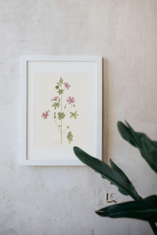 Láminas decorativas para cuadros Malva Silvestre bastidor