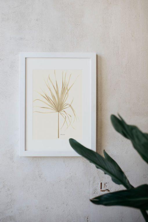 dibujo para cuadro Palmera Arecaceae