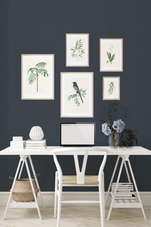 decoracion paredes cuadros laminas acuarela pajaro urraca