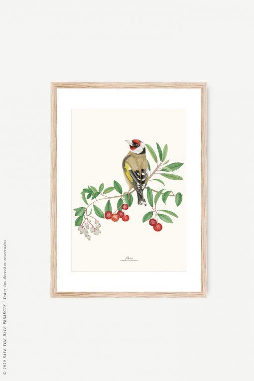 lámina con marco de madera con pájaro jilguero