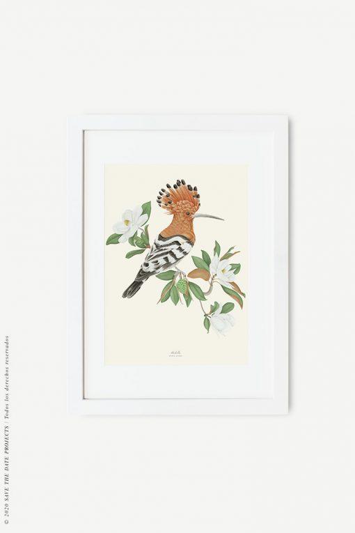 lámina vintage pájaro abubilla