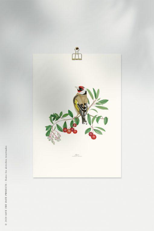 lamina botanica en acuarela con PAJARO jilguero